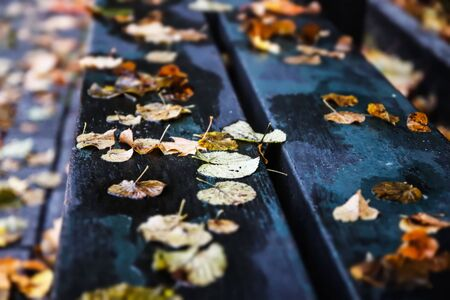 Closeup of autumnal leaves on wooden bench in urban park. Selective focus and blur. Stockfoto - 134877586