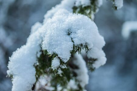 Coniferous forest at winter. Spruce branches covered with snow. Stock fotó