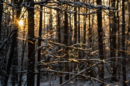 Forest at winter. Branches covered with snow. Stock fotó