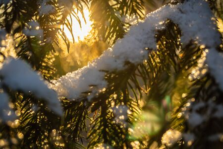 Blurred photo with coniferous forest at winter sunrise. Spruce branches covered with snow. Bokeh effect. Stock fotó