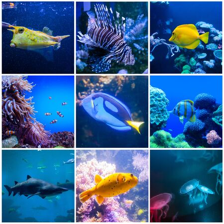 Set of wonderful and beautiful underwater world with corals and tropical fishes. Full size. Banco de Imagens