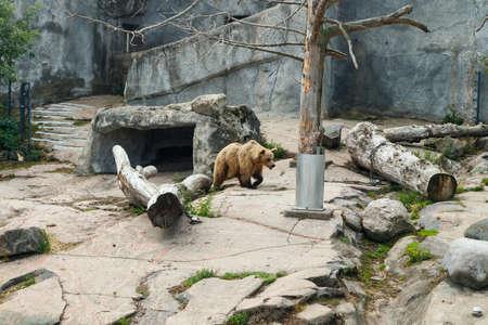 Bear at the Korkeasaari Zoo in Helsinki at summer
