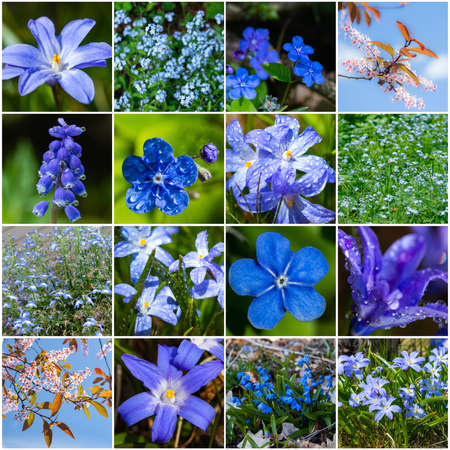 Collage with many images of different blue flowers. Full size.