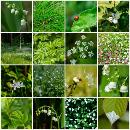 Collage with many images of different green plants. Full size. 免版税图像