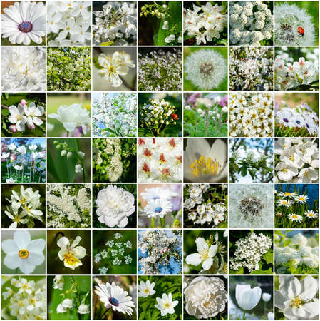 Collage with many images of different white flowers. Full size. 免版税图像