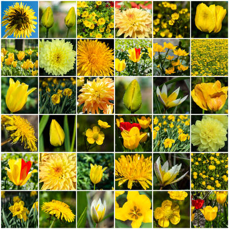 Collage with many images of different yellow flowers. Full size.
