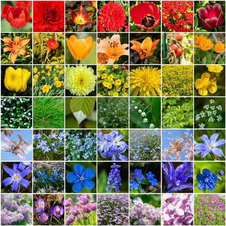 Collage with many images of different colorful flowers in rainbow colors. Full size. 免版税图像