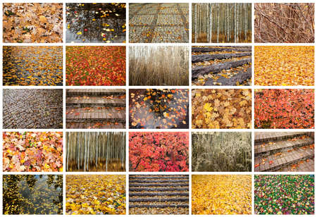 Autumn collage with different autumn textures. Full size. 免版税图像