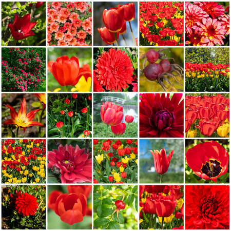 Collage with many images of different red flowers. Full size. 免版税图像