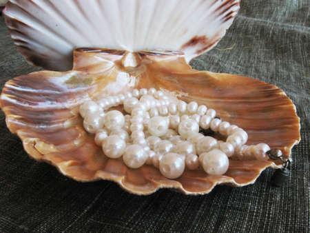 Seashell wiht pearl