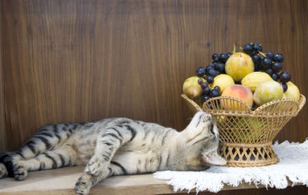 The cat is eating the fruits in vase Stock Photo - 5510979
