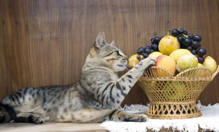 The cat is eating the fruits in vase Stock Photo