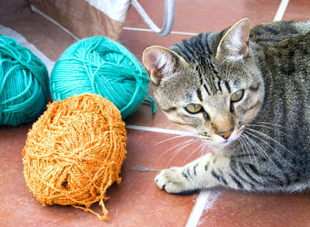 Striped Cat with yarn Stock Photo - 5628209