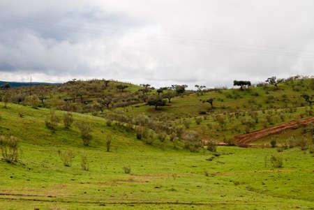landscape of green field  and a road in Alentejo
