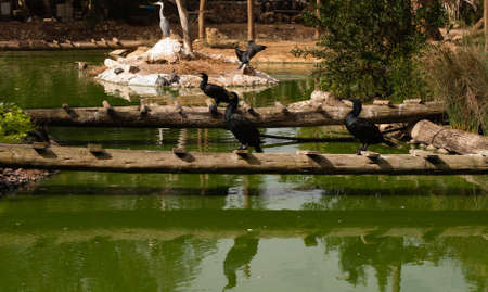 The birds in ZOO in Lagos, Portugal