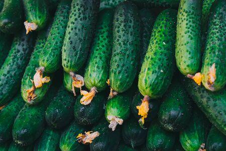 Verse komkommers liggen op het aanrecht op de boerenmarkt te koop