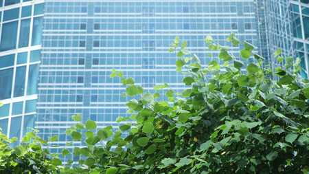 Green leaves of trees sway in the wind against the background of the glass business center