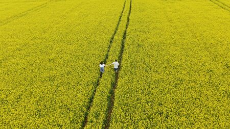 lady in summer dress runs across endless yellow rapeseed field holding boyfriend hand along tractor track upper view