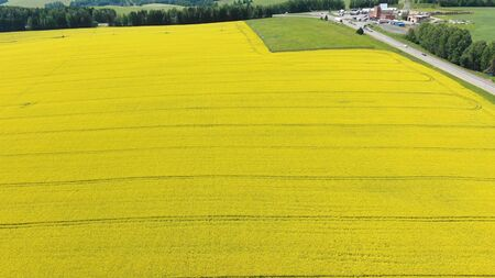 pictorial boundless yellow blooming rapeseed field at grey asphalt road with driving cars and green trees aerial view