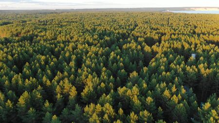 picturesque green dense forest trees with tops lit by sun