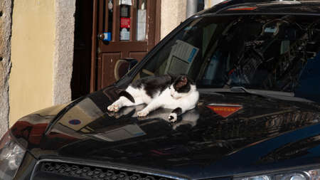 domestic cat lies on the hood of a car and basks in the spring sun