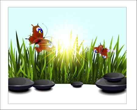 sedge: Green grass and butterflies in the sun