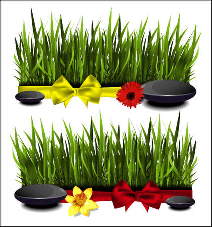 sedge: Green grass with a bow on a white background.