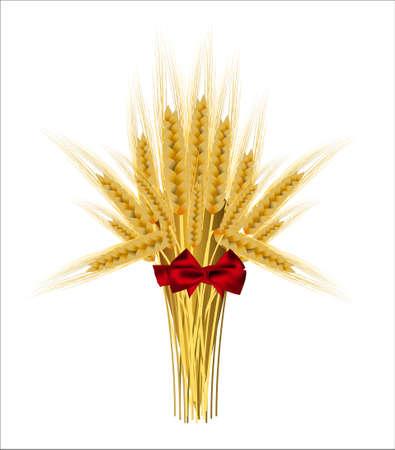 sheaf: Gavilla de espigas de trigo con un arco sobre un fondo blanco Vectores