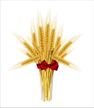 sheaf: Sheaf of wheat ears with a bow on a white background