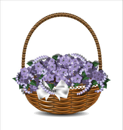 fragrant bouquet: Beautiful purple flowers in a wicker basket with a white bow. Vector illustration.