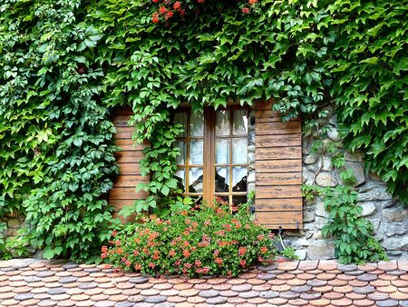 Ivy and flowers around a window with wood shutters Stock Photo - 5423568