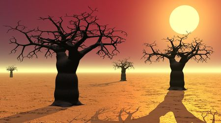 Baobabs by sunset