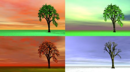Four seasons tree photo
