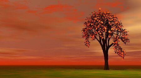 Autumn tree Stock Photo - 5936016