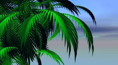 Palm tree leaves Stock Photo - 6082453