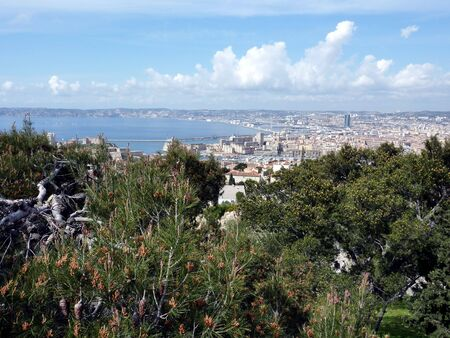 View of the side of the old port of Marseilles, France, behind deep vegetation and by beautiful weather photo