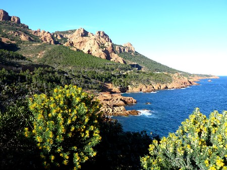 Esterel massif, south of France, and plants and vegetation around, by beautiful weather Stock Photo