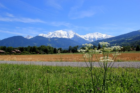 View of the Mont-Blanc massif mountain from a green rural area with a flower by beautifu� weather, France photo
