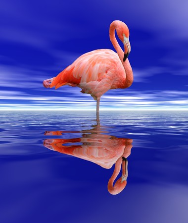 Pink flamingo standing in the deep blue water by night