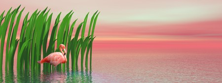 Beautiful pink flamingo standing alone in the water in front of green waterplant by sunset photo