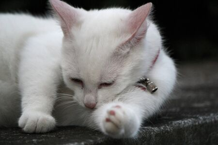 White little kitten lying on a wall and cleaning its leg photo