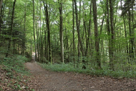 Pathway in a green forest by summertime Stock Photo - 8457436