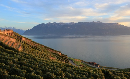 Famous and protected Lavaux vineyards near Montreux and mountains on Lake Geneva, Switzerland, by sunset