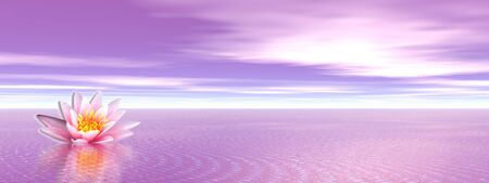 nymphaea: Pink lily flower in the violet ocean Stock Photo