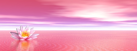 zen water: Pink lily flower in the pink ocean Stock Photo