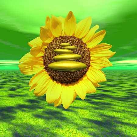 peacefull: Close up of a sunflower with zen stones in the middle and in green ecological background Stock Photo