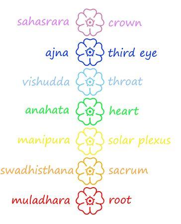 chakras: Flores de colores en la columna de chakra con sus nombres en fondo blanco