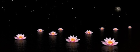Several pink lily flowers in the water by night with moon and stars photo