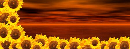 pollutant: Background of cloudy red sky and ocean with lots of sunflowers on down and on the left side