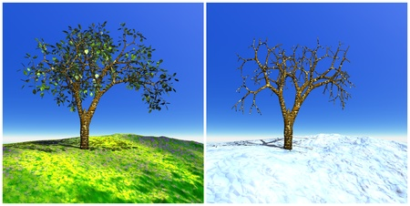 Two seasons tree for summer and winter time photo